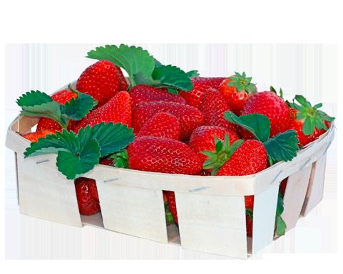 fraise-barquette-250g