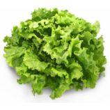 salade-batavia-blonde-x12