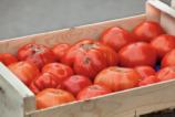 caissette_tomates